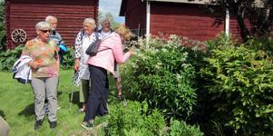 SPF Mora cyklande seniorer har gjort en utflykt till Maj-Lis Burtus örtagård och gjort en djupdykning i botaniken.
