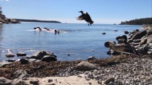 Vid Knappelskär kan man se tre simningar, men även vid Första Pumpviken kan man se delar av loppen. Foto: Helena Dalivin