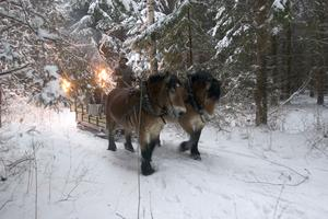Så här har det sett ut när Kjell Sjöström kört gästerna i släde dragen av ardennerhästar till julbordet  i Tomtens stuga utanför Ubblixbo. Bilden är från premiäråret 2005.