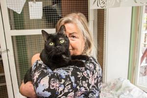 Helena Lång menar att den nya djurskyddslagen är tandlös så länge katterna inte blir märkta och ägarna registreras.