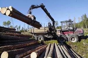 I väntan på regn har många entreprenörer tvingats att stå still med sina skogsmaskiner i flera månader.