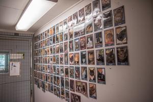 I entrén till Nynäshamns katthem sitter bilder på alla katter som har fått nya hem.
