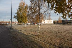 Gräsplätten vid Lidl kan vara en bra plats för att skapa fler arbetstillfällen för unga, enligt moderaterna Erik Hamrin och Tomas Bergling.