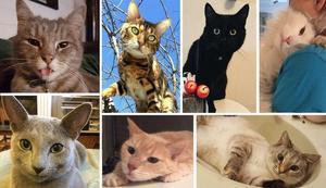 De här katterna deltar inte i tävlingen.