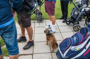 Hunden Donna får också följa med på en golfrunda.