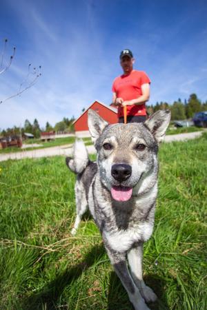 Jan-Ove Kardells hund Hugo är en av hans viktigaste kompanjoner i skogen: