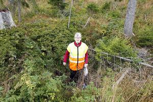 Anna Marntell på skogsstyrelsen i Västernorrland har engagerat sig i skydd av forn- och kulturmiljöer i skogen. Som fångstgropar, där lämnade kulturstubbar minskar risken för skador.