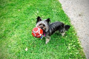 Hunden Sune finns inte längre. Den attackerades av en annan hund och tvingades avlivas.