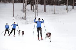 Teamwork, draghundssport är en härlig vinteraktivitet tillsammans med din fyrbenta vän, menar tjejerna i Härnösands draghundsklubb. Men du bör nog inte vara farträdd.