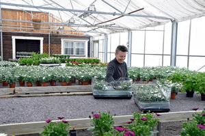 Jenny Eriksson har bråda dagar med att få allt på plats i handelsträdgården i Kopparberg.