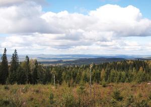 Ett av benen inom Voxnadalens biosfärområde är skogen.