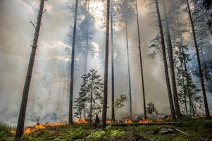 Skogsbranden i Broddbo är den av de två stora bränder som är närmast Avesta. Cirka två mil från kommungränsen. Foto: Niklas Hagman.