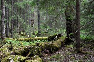 De sällsynta och hotade arterna i området är knutna till grova och fallna träd, inte minst asp, i olika dimensioner och nedbrytningsstadier.