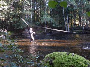 Fiske är en av anledningarna till att turismen ökade i Gävleborg under sommaren. Foto: Region Gävleborg