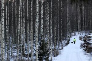 Att använda restprodukter från skogsindustrin kan vara positivt, men bygger ändå på att den växande volymen i skogen inte minskar. Vi förutsätter att denna kunskap finns med i SCA:s klimatanalyser, skriver debattförfattarna. Foto: Matthias Schrader/TT