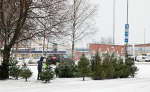 Också nära Lidl i Sandviken säljs granar av företaget Frukt och grönt i Katrineholm AB.