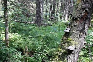 Skogar med höga naturvärden, vars näringsväv innefattar en flora och fauna, som ger plats åt såväl småkryp som lavskrikor. Det är om sådana skogar striden står, skriver Bo Jonsson.