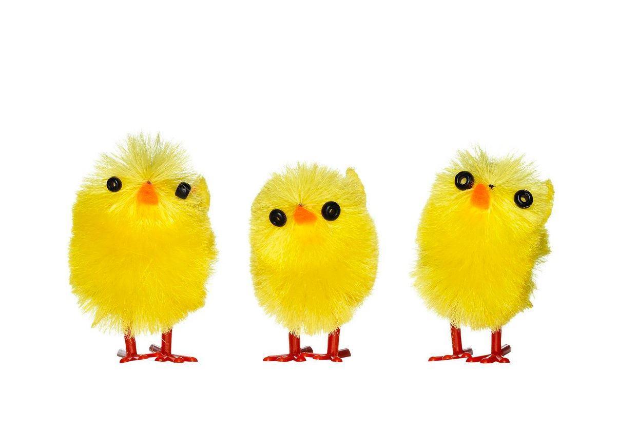 Polis beslagtog kycklingar