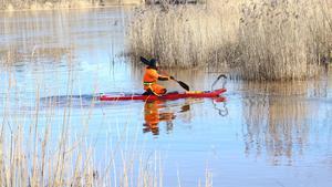 Svanar frös fast i sjö – fick hjälp av räddningstjänsten