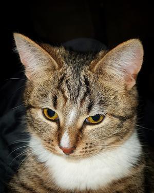 470) Nytillskottet i familjen, har inte fått nåt riktigt namn än. En liten kattkille på ca 6 månader. Bor i Strand/Stråtjära. Foto: Marie Nymark