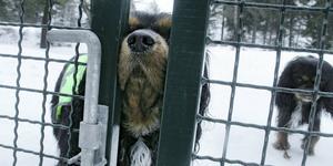 Hit men inte längre. Kommunens Samhällsbyggnadsutskott har beslutat att stänga hundrastgården i Sveg. Fotograf: Ida Frid
