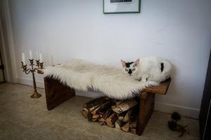 Paret har två katter av rasen Devon Rex. På bilden syns Gizmo. Parets andra katt heter Hjalmar.