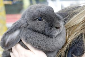 Smådjurschansen förespråkar ett burfritt kaninliv.
