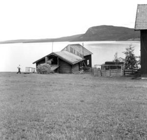 Sista höbärgningen på en gård i Valmåsen intill sjön Lossen sommaren 1960, innan området dränktes i samband med vattenregleringen.