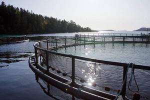 Odlingskasse för fisk hos Ålands Fiskförädling i Nätrafjärden.