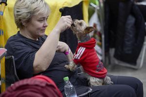 Därutöver fanns hundar som bara var med som sällskap.                  – Jag kallar henne för mingelhund, säger Anette Boström Sidestål, Skärplinge, om sin nioåriga Yorkshireterrier Belle.