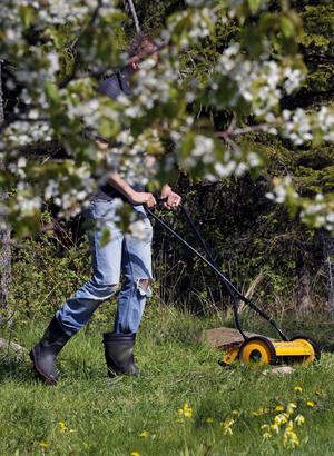 Att klippa gräsmattan med en handjagare är förstås det mest miljövänliga alternativet, men om man är lite mer bekväm av sig är en batteridriven gräsklippare ett bra alternativ.    Foto: Hasse Holmberg/TT