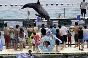 Turister tittar på delfiner i Taiji, staden som kritiseras för sin hantering av djuren.