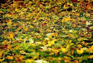 Täck jord med fallna löv, de blir näring när de förmultnar.