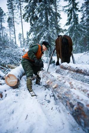 John Ingelsson  från Rörström och hans ardenner Torin är ett strävsamt par i skogen. Tillsammans gör de sex fulla dagsverken i skogen varje vecka.