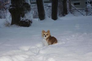 Chica är lycklig över all snö som kommit och väljer gärna de oskottade vägarna.