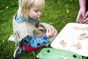 Tvååriga Izabelle Ådahl hjälpte till att lossa kotor från en fisk.