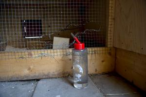 Någon klippte upp nätet på burarna och stal djuren.