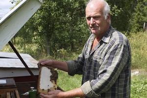 Svante Melchior har odlat bin i Billinge i över 10 år. Trots att han förlorade ett bisamhälle i början av året blir det mycket honung i år.