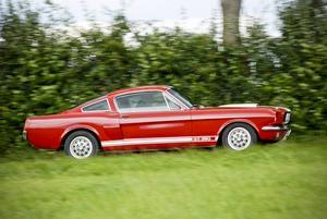 Mustang Shelby GT 350 var en högprestandamodell som byggdes mellan 1965 och 1970 av legenden Carroll Shelby. Det fanns även en GT 500. Samarbetet upptogs på nytt så sent som 2007 då det kom en ny Shelby Mustang.   Foto: Maurice Volmeyer/Shutterstock.com