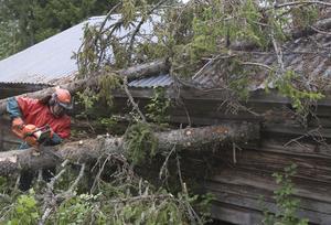 Tord Andersson är van att jobba i skogen och tar hand om de nedfallna träden.
