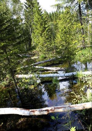Rena träsklandet har uppstått bitvis längs Månstaån. Där det ser som värst ut har ån fullkomligt svämmat över bredden och ett stort antal träd ligger fällda över marken.