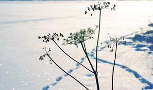 Visst är det vackert med snö som gnistrar, bara det inte vore så ruggigt kallt. Men snart kan vi dock ge oss ut och pulsa, om SMHI håller vad de lovar.