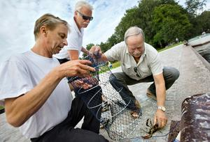 Gunnar Hörhammer vittjar provfriskburar tillsammans med Karl-Heinz Nilsson och Stig Broberg från kommunen.