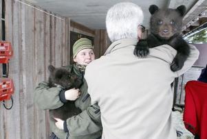 Olle Larsson, vd och Ann-Sofie Stenberg, djurskötare, med två av björnungarna.