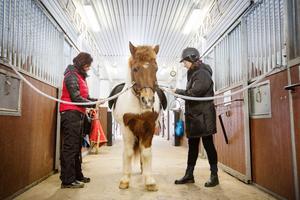 Den som inte har egen häst kan hyra på gården. Hervör är en pigg och snäll dam.