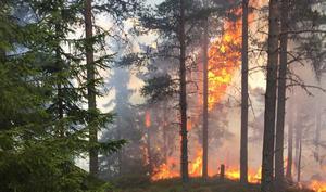 Det som gjorde släckningsarbetet under branden vid Jerkersbodberget komplicerat var bland annat att det brann högst upp på berget.