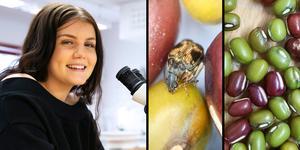 För att kunna genomföra elevarbetet fick bönbaggarna följa med hem från labbet under jullovet.