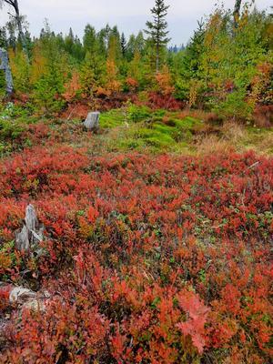 Fantastiska färger i naturen nu.