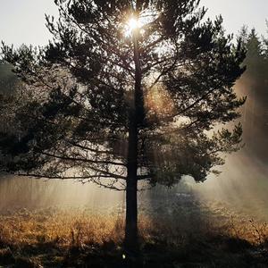 Hedersomnämnande: Kanske inte en så vårig bild, men oj så vacker. Ljuset genom trädet, ljuset på fjolårsgräset. Foto: Morgan Andersson