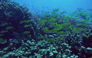 Korallreven är snart utplånade och om 30 år är det mer plast än fisk i haven. Vad håller vi på med?